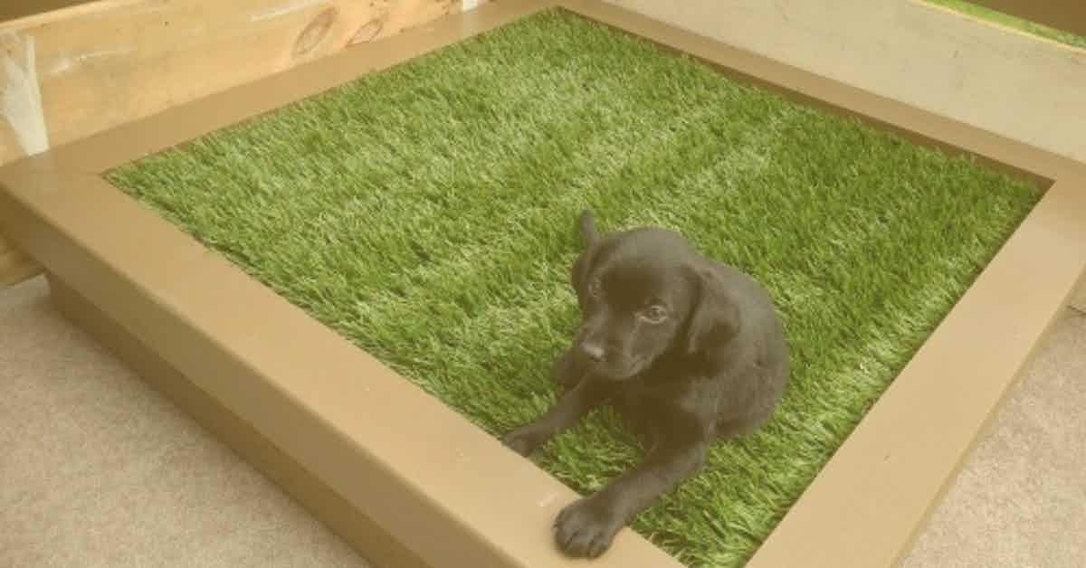 Portable Artificial Grass Carpets